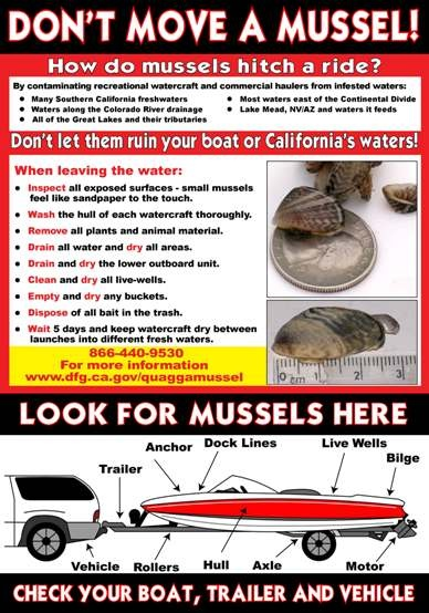 Don't_Move_Mussel_Poster