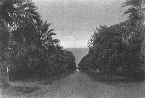 Lake Elsinore Walnut Tree Grove 1906
